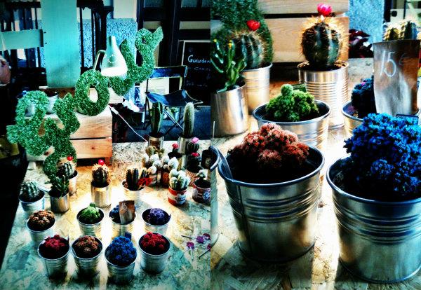 mdm cactus